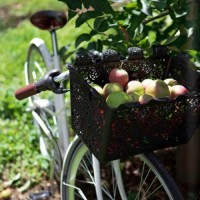 Basket of Apples on Bike