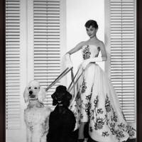 Audrey Hepburn with Poodles
