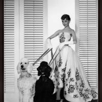 Audrey Hepburn with Poodles