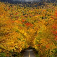 Autumn road with fall trees