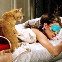 Cat waking up owner
